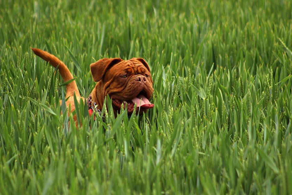 3 søde hunderacer som du måske ikke kender