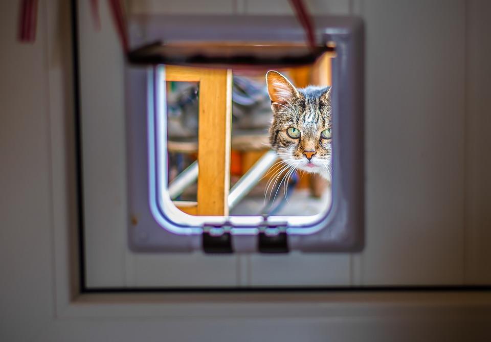 Sådan får du succes med din kattelem derhjemme